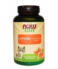 NOW PETS L-Lysine for CATS