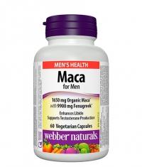 WEBBER NATURALS Maca for Men / 60 Vcaps